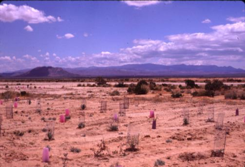 29 palms Revegetation