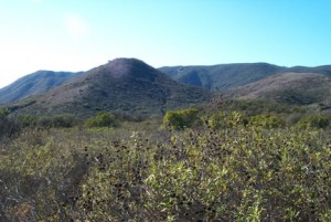 Coastal Sage Scrub ecosystem at Santa Margarita Ecological Reserve