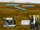 Methane suppression by iron and humic acids in soils of the Arctic Coastal Plain