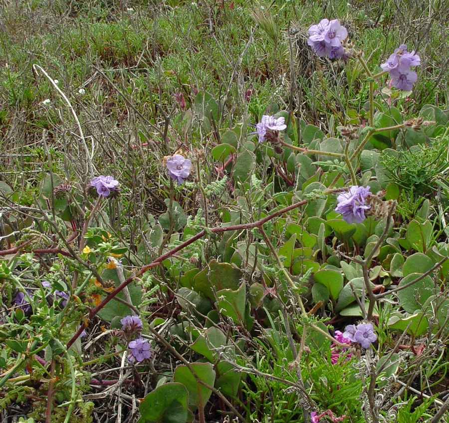 Chaparral and Riparian Plants