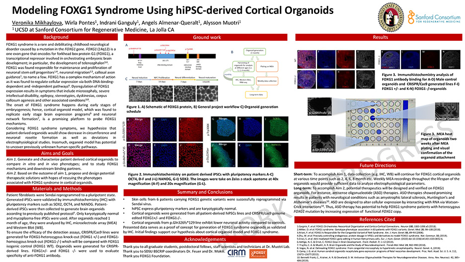 Modeling FOXG1 Syndrome Using hiPSC-derived Cortical Organoids