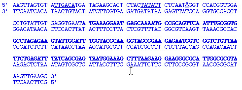 Dna strands references pronofoot35fo Image collections